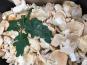 Trapon Champignons - Pieds De Mouton Frais - 1 Kg