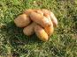 La Ferme Boréale - Pommes De Terre Belle De Fontenay Calibre 35-55 - 5kg